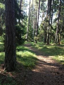 skog på Ljusterö